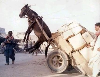 burro en marruecos