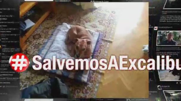 Javier_Garcia-Prieto_Cuesta-Hoy_en_la_red-perro-ebola-enfermera-Excalibur_MDSVID20141007_0189_8